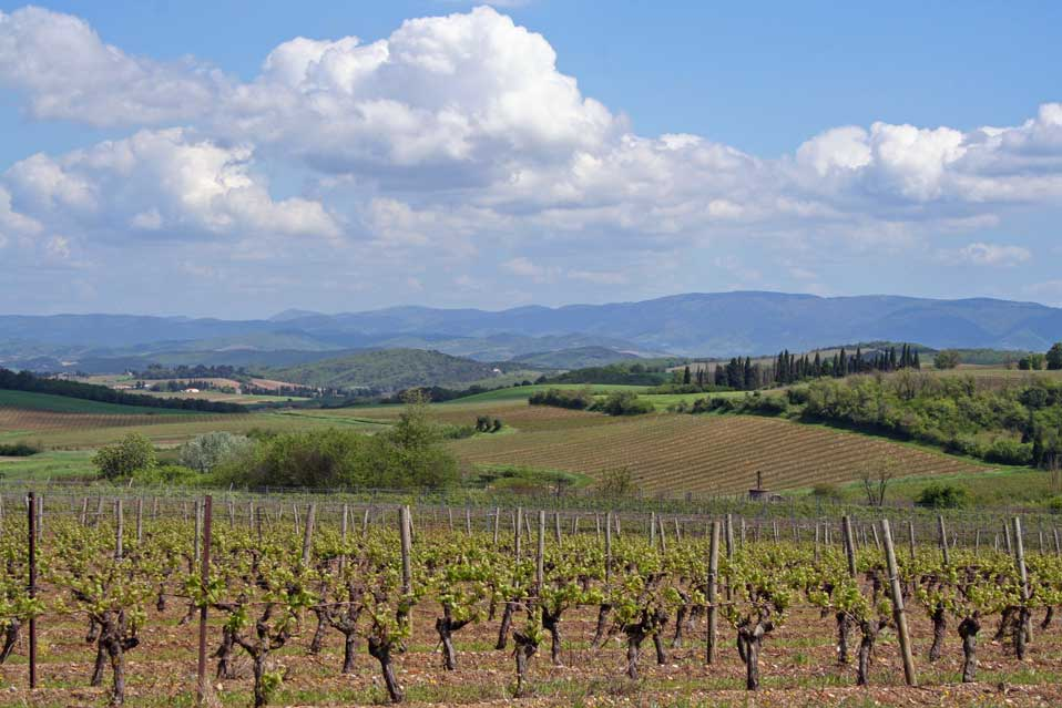 Girard-vineyards