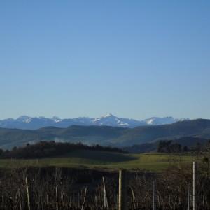 Girard vines & Pyrenees