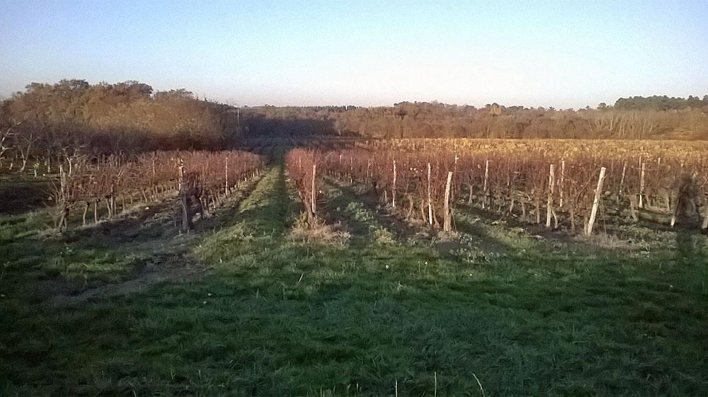 Villa-Dria-vineyard